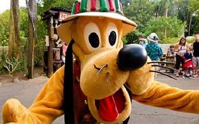 Pluto at Animal Kingdom