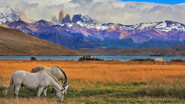 Lake Laguna Azul in the mountains. On the shore of Lake grazing horses. Impressive landscape in the national park Torres del Paine, Chile (kavram / iStock / Getty Images Plus)