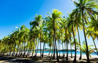 Palms at the beach in Puerto Carrillo, Costa Rica in opposite light. Puerto Carrillo is a small village at the Pacific Coast on the Peninsula Nicoya. (Thomas Ramsauer / iStock / Getty Images Plus)