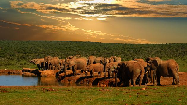 Safari, game drive at Addo Elephant National Park, South Africa