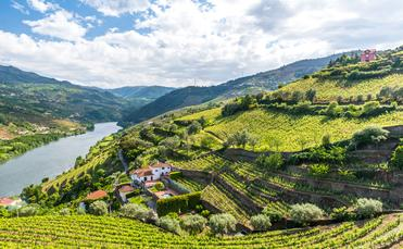 Beautiful Landscape of the Douro river region in Portugal - Vineyards (Photo via SimonDannhauer / iStock / Getty Images Plus)