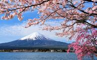 Mount Fuji and Cherry tree, Japan (photo via Goryu / iStock / Getty Images Plus)