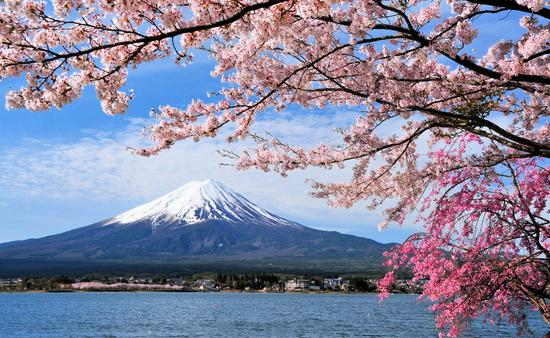 Mount Fuji and Cherry tree, Japan (photo via Goryu / iStock / Getty Images Plus)