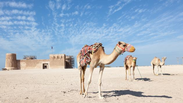 Qatar - Travel Guide and Latest News | TravelPulse