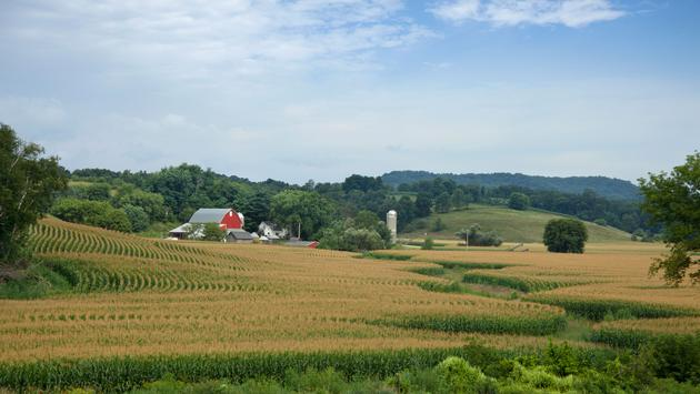 Lovely Wisconsin farm with red barn surrounded by hills and a field of mature corn (photo via Willard / iStock / Getty Images Plus)