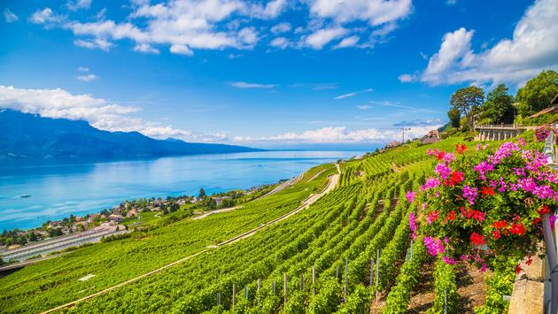 Beautiful scenery with vineyard terraces in famous Lavaux wine region, UNESCO World Heritage Site since 2007, overlooking the northern shores of Lake Geneva, Canton of Vaud, Switzerland. (photo via bluejayphoto / iStock / Getty Images Plus)