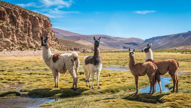 Bolivia (Photo via PocholoCalapre / iStock / Getty Images Plus)