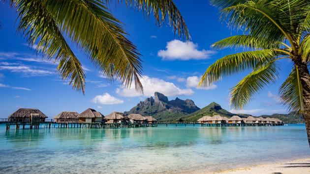 Beautiful scenic view of Bora Bora framed by palm trees (photo via rebelml / iStock / Getty Images Plus)