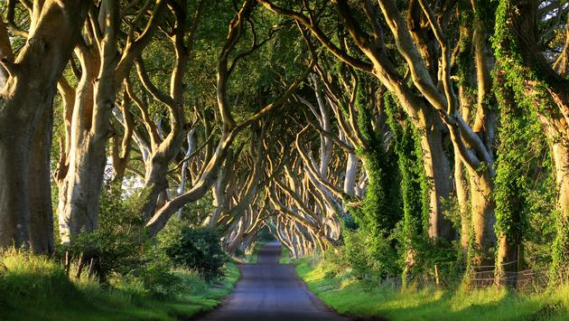 Dark Hedges in Co. Antrim, Northern Ireland (Mnieteq / iStock / Getty Images Plus)