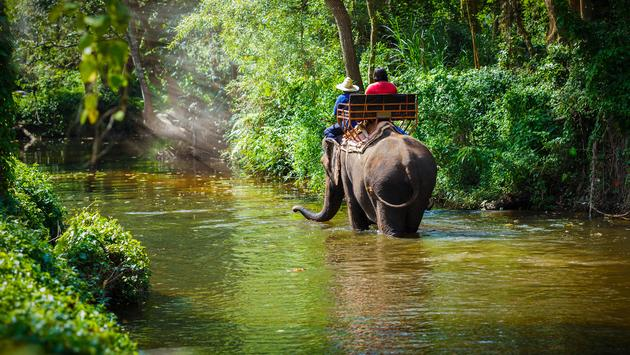 Traveler riding on elephants Trekking in Thailand (photo via Pixfly / iStock / Getty Images Plus)
