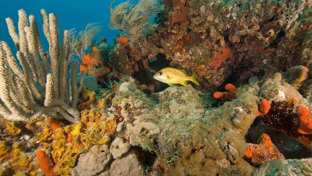 Underwater coral reef (photo via KGrif / iStock / Getty Images Plus)