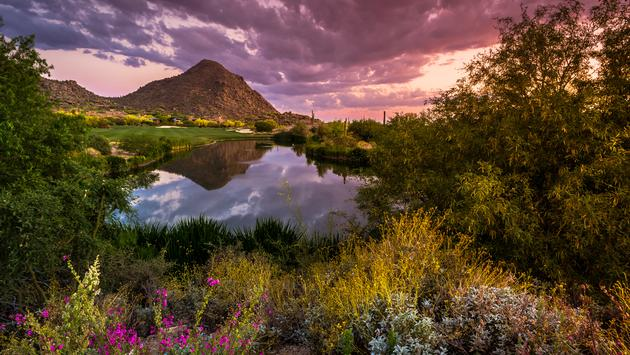 Sonoran Desert in full spring Bloom at sunset in Scottsdale, Arizona (photo via SMcGuire45 / iStock / Getty Images Plus)