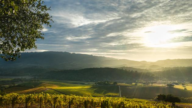 Panorama of Sonoma Valley wine country with rolling hills in autumn at harvest time. (KarenWibbs / iStock / Getty Images Plus)