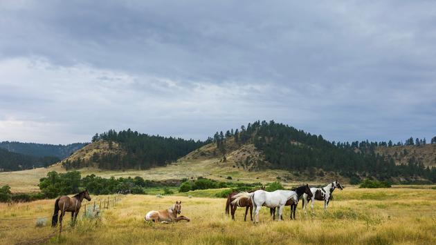 Horses at dawn on the prairie, Montana, USA. (Photo via Danielrao / iStock / Getty Images Plus)