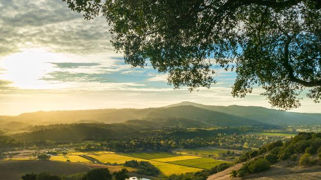 Vista of Sonoma Valley wine country in autumn. Looking down on patches of yellow and green vines. Sun rays shine over mountains and valleys, tree in foreground. (photo via KarenWibbs / iStock / Getty Images Plus)