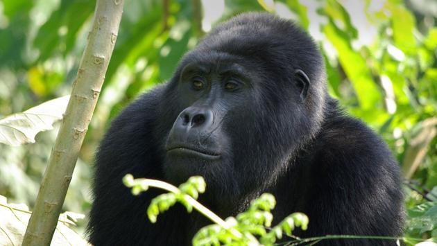 Gorilla Trek Independent Adventure
