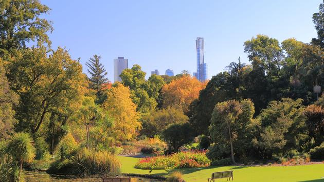 Beautiful Botanic Gardens cityscape in Melbourne Australia (photo via TkKurikawa / iStock / Getty Images Plus)
