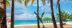 Jamaica beach with palm trees in Montego Bay on Caribbean see. (lucky-photographer / iStock / Getty Images Plus)