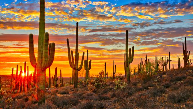 Sunset in Sonoran Desert, near Phoenix. (Photo via tonda / iStock / Getty Images Plus)