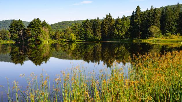 Allegany State Park