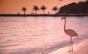 Flamingo on Renaissance Island in Aruba