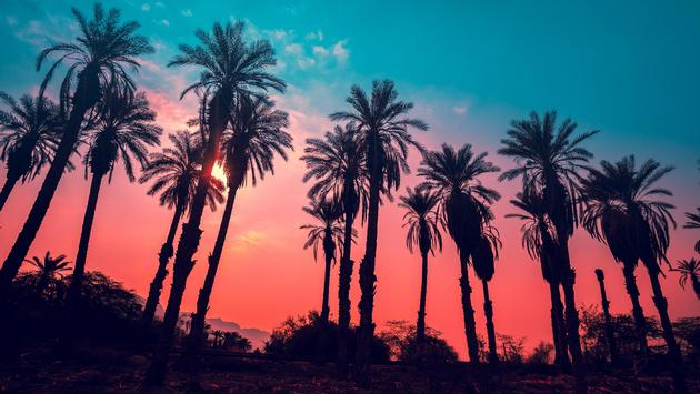 tropic palm trees against sunset sky