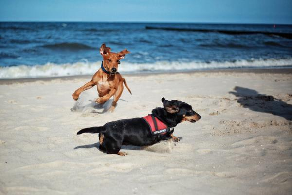 Tourism Ad Shows Dogs Need Vacations Too