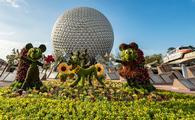 Epcot, Disney, flower