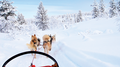 Iditarod Race & Fur Rondy Tour Package