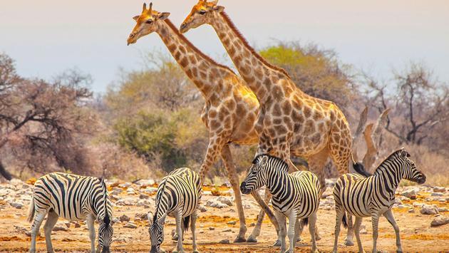 Exodus Quest - Cape Town to Victoria Falls