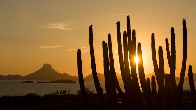 Desierto de Sonora al atardecer (Foto de Visitmexico)