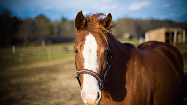A majestic horse