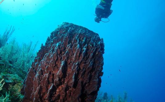 Diving Belize Barrier Reef