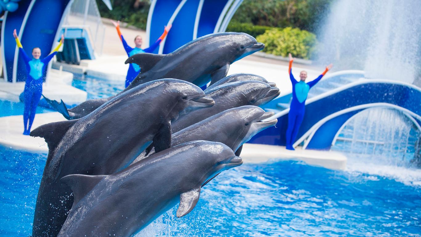 SeaWorld, Busch Theme Parks in Florida to Reopen June 11