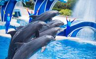 Dolphin Days at SeaWorld Orlando, Florida.
