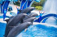 Dolphin Days at SeaWorld Orlando, Florida.