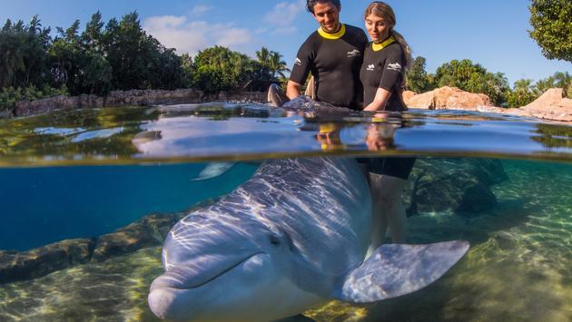 Dolphin Lagoon at Discovery Cove, Orlando, Florida.