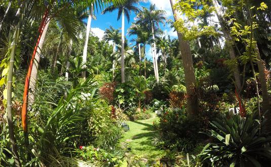 Hunte's Gardens, Barbados