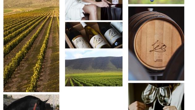 Vinos Don Leo produce uvas Cabernet-Sauvignon, shiraz, chardonnay, pinot noir, así como otras para producir vino rosado y Kosher.