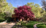 Red and green trees with lawn and hammock on grounds of Adobe & Pines Inn in Taos