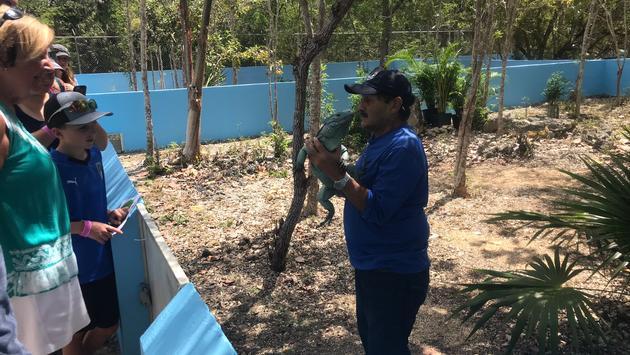 Blue Iguana Habitat, Grand Cayman