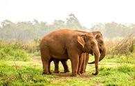 Ethical Elephant sanctuaries