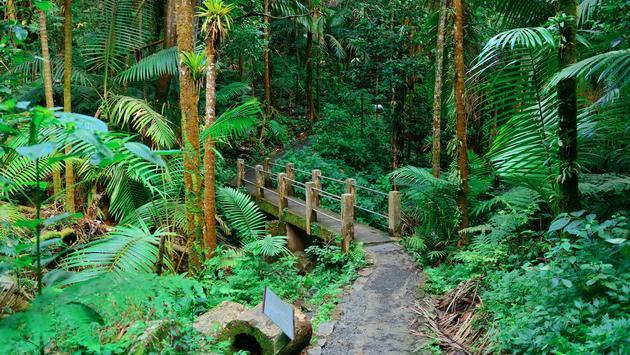 Tropical rain forest in San Juan Puerto Rico