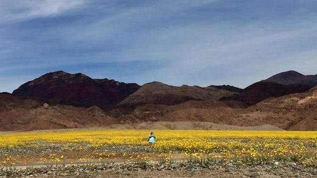 Death Valley 2016 super bloom