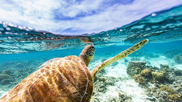 Sandals Ocean Day Program