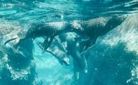Swimming with sea lions in La Paz