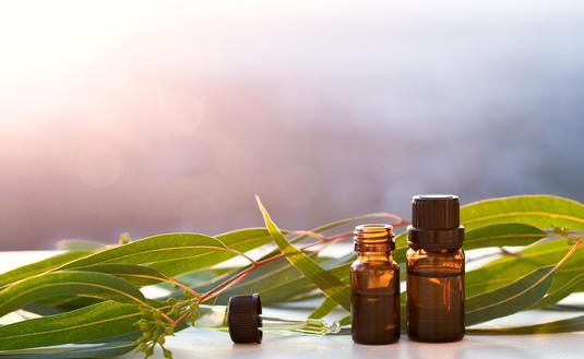 Eucalyptus aromatherapy.