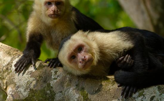 Costa Rica wildlife1