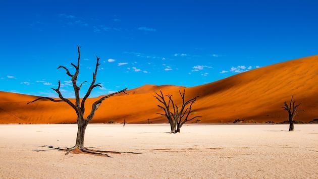 Deadvlei near Sossusvlei in Namibia