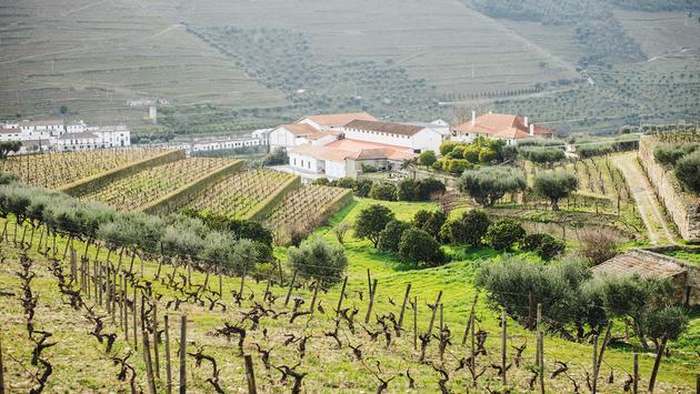 PHOTO: Croft Vineyard, Douro Valley (photo via Hans Brunk)